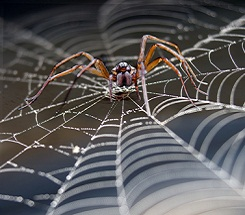 Backyard Science: Nature's Spooks