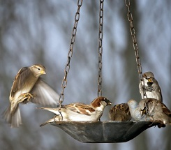 Backyard Science: Feed the Birds
