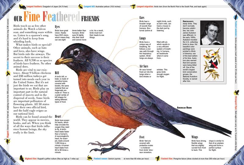 Preste atención a los pájaros | Sojourners