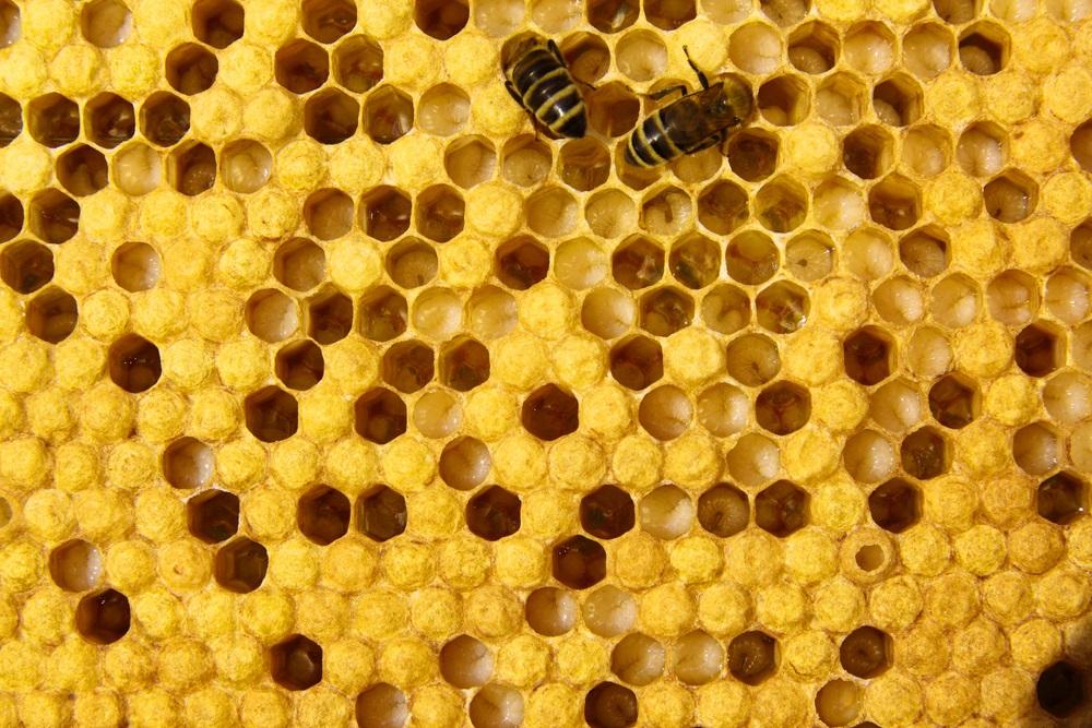 Bee eggs hatching - photo#11